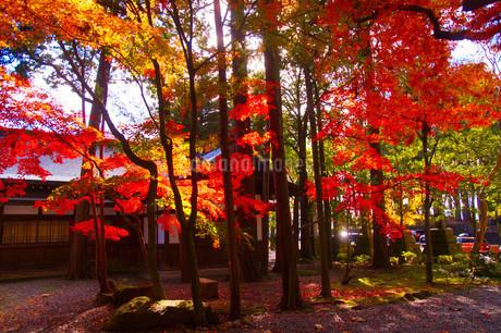 秋の日本庭園の写真素材 [FYI03428894]