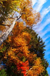 秋の空の写真素材 [FYI03428898]