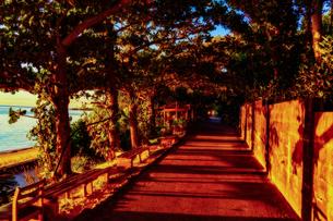 備瀬のフクギ並木の写真素材 [FYI03428938]