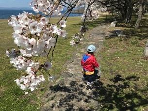 桜と海との写真素材 [FYI03429048]