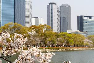 高層ビルと桜の写真素材 [FYI03429133]