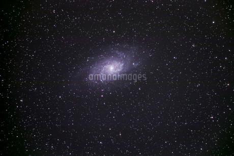 M33 渦巻銀河 さんかく座の写真素材 [FYI03429145]