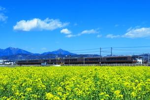 菜の花と小田急ロマンスカーEXEの写真素材 [FYI03429234]
