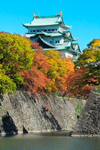 名古屋城天守閣と紅葉に秋の空の写真素材 [FYI03429311]