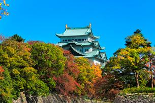 名古屋城天守閣と紅葉に秋の空の写真素材 [FYI03429314]