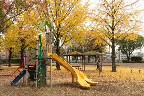秋の公園の写真素材 [FYI03429434]