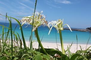 花と海の写真素材(種子島)の写真素材 [FYI03429568]