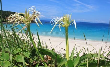 花と海の写真素材(種子島)の写真素材 [FYI03429574]