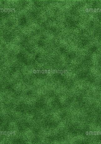 芝生の写真素材 [FYI03429609]
