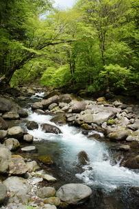 渓流の新緑の写真素材 [FYI03429741]
