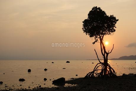 マングローブと夕日の写真素材 [FYI03430070]