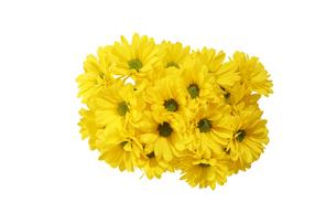 菊の花束の写真素材 [FYI03430114]