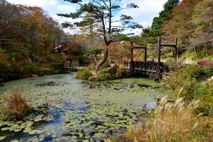 紅葉の六甲高山植物園の写真素材 [FYI03430577]
