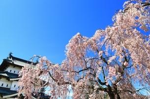 弘前城本丸と桜の写真素材 [FYI03430791]