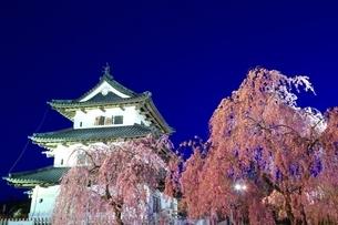 弘前城本丸と桜のライトアップの写真素材 [FYI03430802]