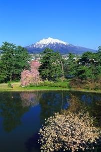 弘前公園より望む岩木山の写真素材 [FYI03430815]