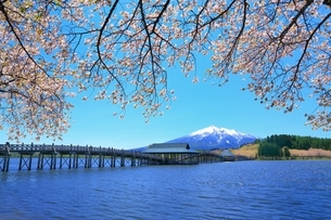 鶴の舞橋と桜に岩木山の写真素材 [FYI03430823]