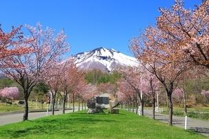 岩木山と桜の写真素材 [FYI03430838]