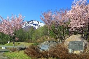 岩木山と桜の写真素材 [FYI03430842]