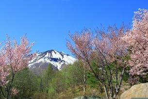岩木山と桜の写真素材 [FYI03430843]