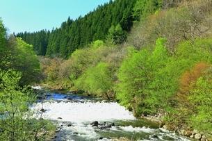 新緑の蔦川の写真素材 [FYI03430855]