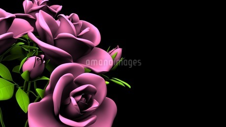 Pink Roses Bouquet On Black Text Spaceのイラスト素材 [FYI03431102]