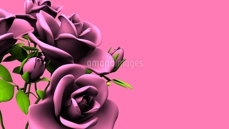 Pink Roses Bouquet On Pink Text Spaceのイラスト素材 [FYI03431106]