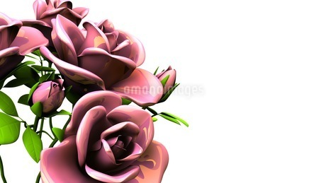 Red roses  bouquet on white text spaceのイラスト素材 [FYI03431108]