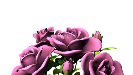 Red roses  bouquet on white text spaceのイラスト素材 [FYI03431109]