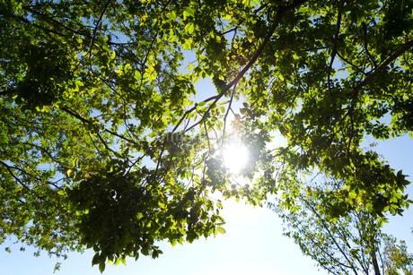 木漏れ日の写真素材 [FYI03431116]