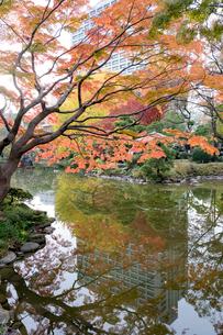 東京の風景の写真素材 [FYI03431152]