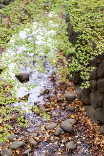 東京の風景の写真素材 [FYI03431155]