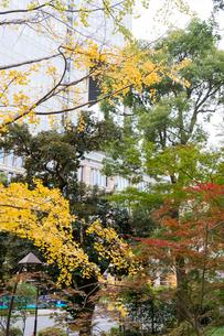 東京の風景の写真素材 [FYI03431168]