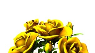 Yellow Roses Bouquet On White Text Spaceのイラスト素材 [FYI03431185]