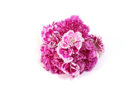 カーネーションの花束の写真素材 [FYI03431317]