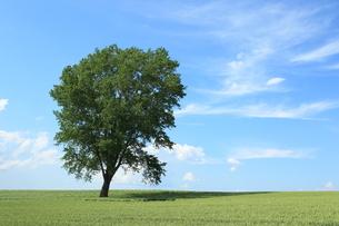 哲学の木の写真素材 [FYI03431324]