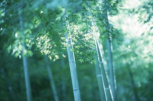 竹林の写真素材 [FYI03431325]