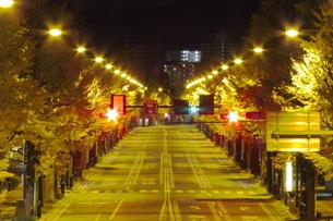 甲州街道いちょう並木 夜の風景の写真素材 [FYI03431639]