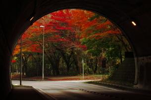 トンネルの中から紅葉狩りの写真素材 [FYI03431641]