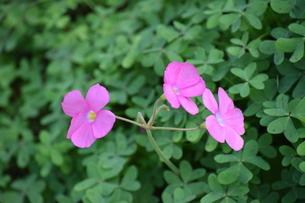 花の写真素材 [FYI03431946]