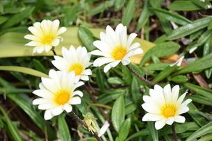 花の写真素材 [FYI03431948]