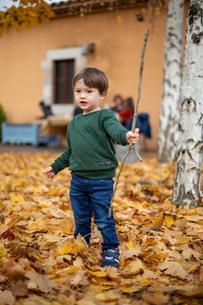 ハーフの幼児が沢山の落ち葉のなかで枝を持って遊ぶの写真素材 [FYI03431955]