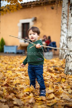 ハーフの幼児が沢山の落ち葉のなかで枝を持って遊ぶの写真素材 [FYI03432025]