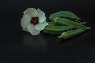オクラとその花の写真素材 [FYI03432091]