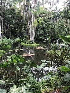 シンガポール植物園の写真素材 [FYI03432243]