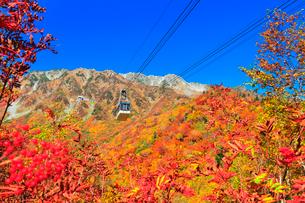 秋の立山ロープウェイ 快晴の空と紅葉の写真素材 [FYI03432256]