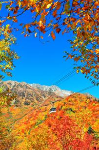 秋の立山ロープウェイ 快晴の空と紅葉の写真素材 [FYI03432259]