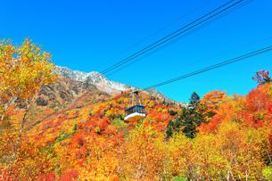 秋の立山ロープウェイ 快晴の空と紅葉の写真素材 [FYI03432260]
