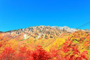 秋の立山 快晴の空と紅葉の写真素材 [FYI03432262]