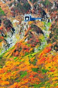 秋の立山ロープウェイと紅葉の写真素材 [FYI03432271]